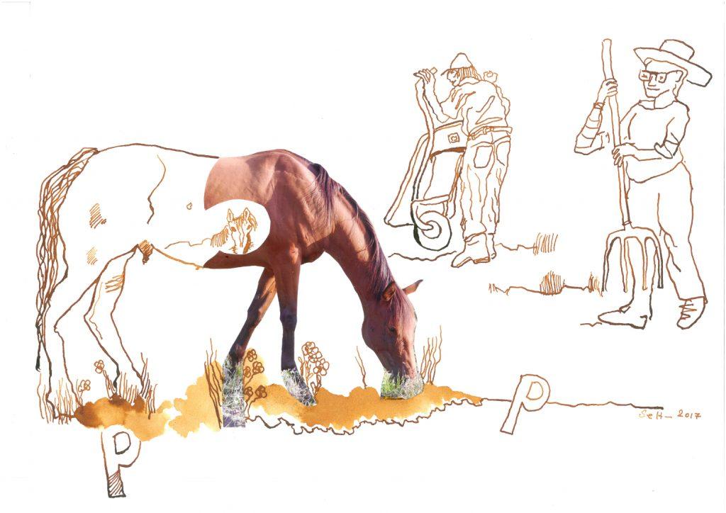 In Büchern malen und schreiben – darf man das? Die Landtiere als Ausmalbuch?