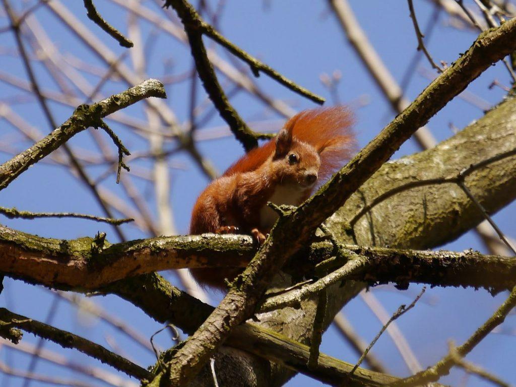 Zwei Eichhörnchen im Hof